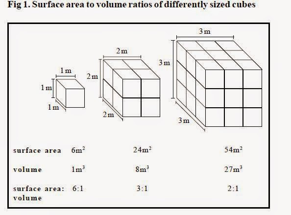 a lab experiment on the effects of the surface area to volume ratio on the rate of diffusion of mate