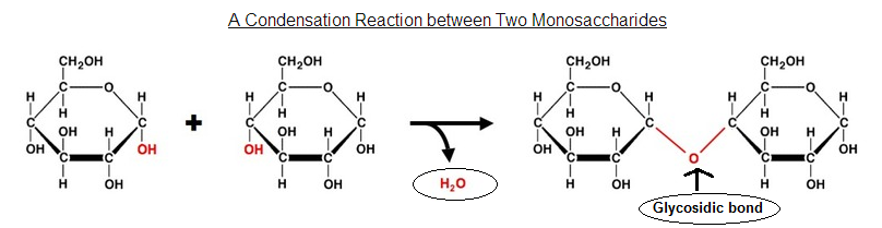 Hydrolysis reaction (splitting by water): disaccharides ...